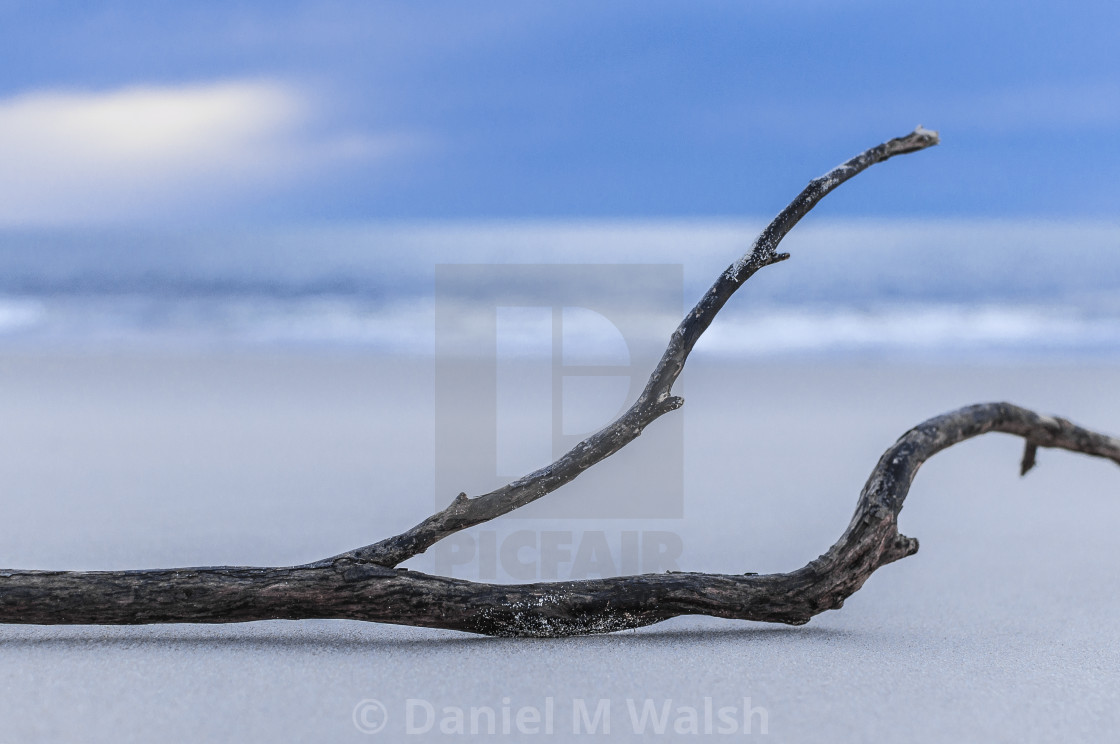 """Driftwood washed up on the shore at the beach"" stock image"