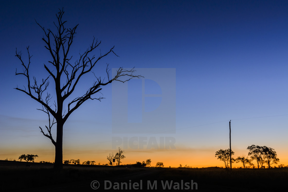 """Trees and power pole silhouette skyline in with warm glowing horizon."" stock image"