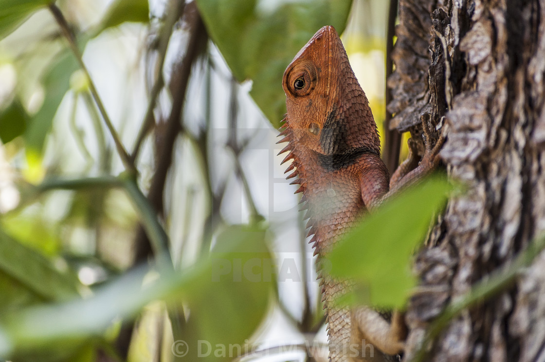 """A lizard resting on a tree"" stock image"