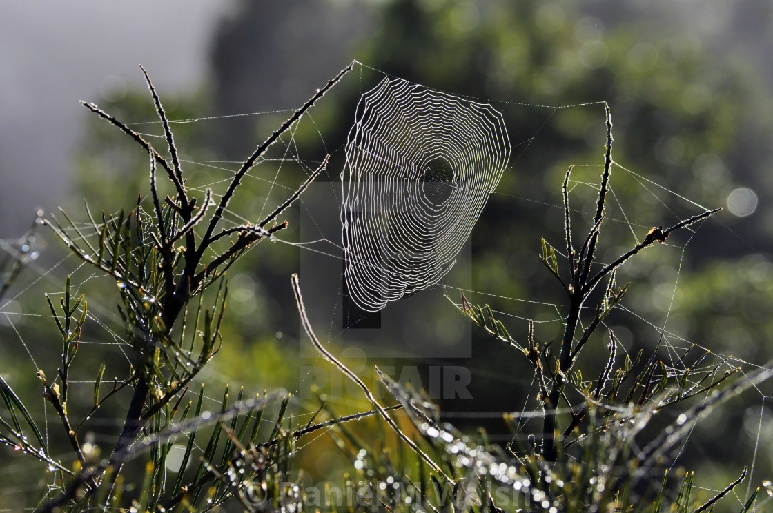 """Spider web strung between plants"" stock image"
