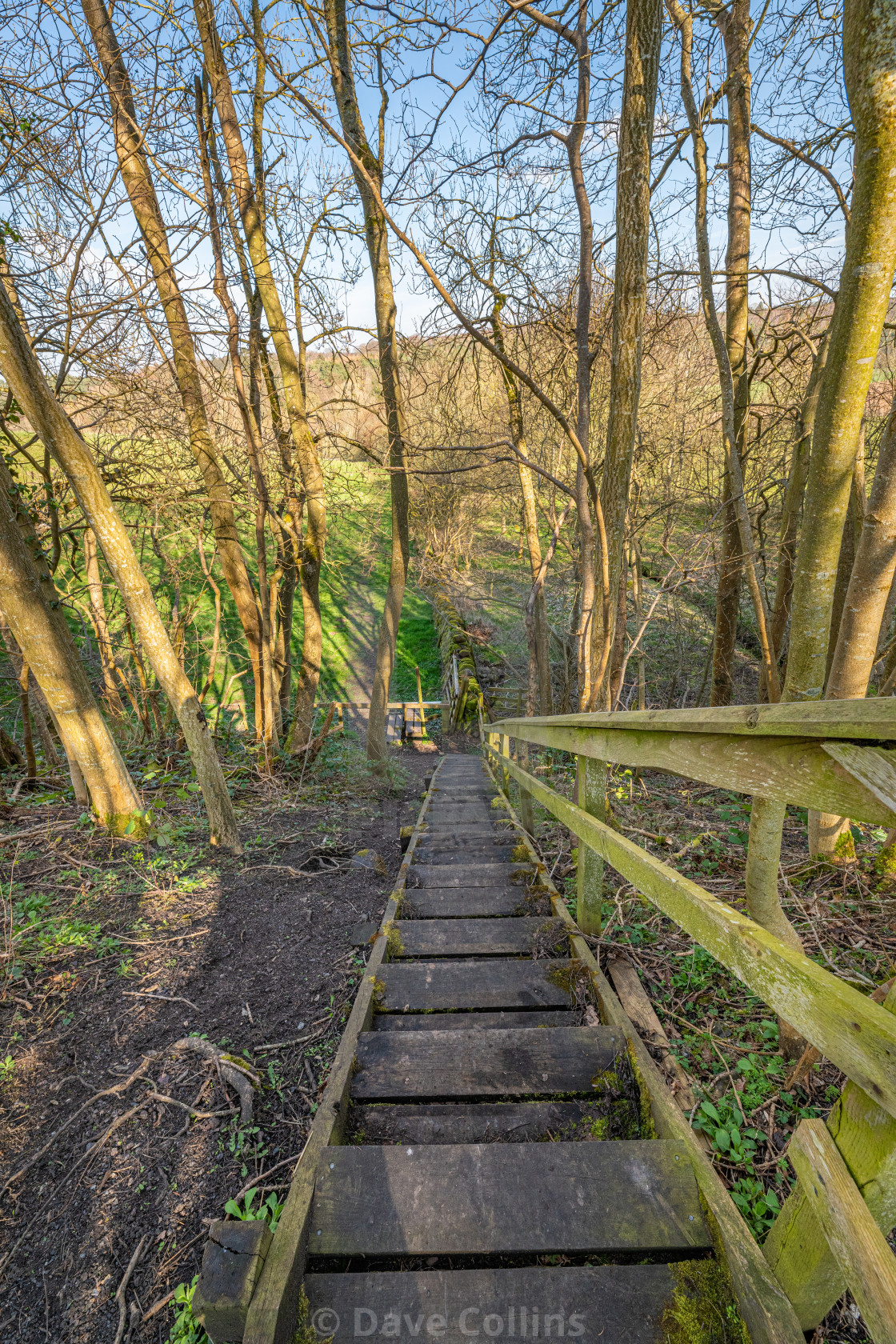 """""""Wooden Steps on Four Borders Abbeys Way Long Distance Footpath"""" stock image"""