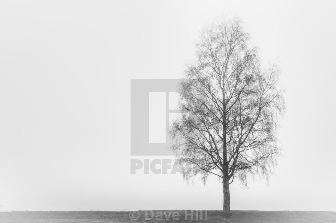 """Silent Tree"" stock image"