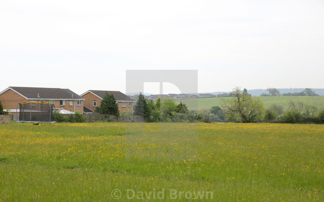 """Meadow at Etherley Moor"" stock image"
