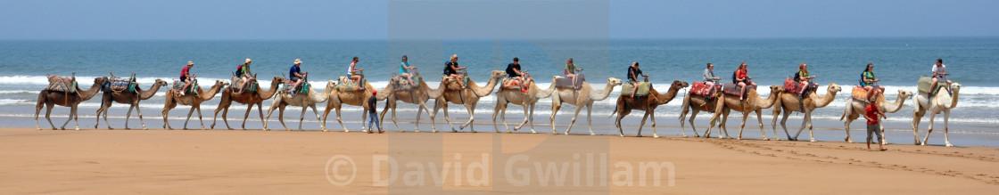 """Camel train"" stock image"