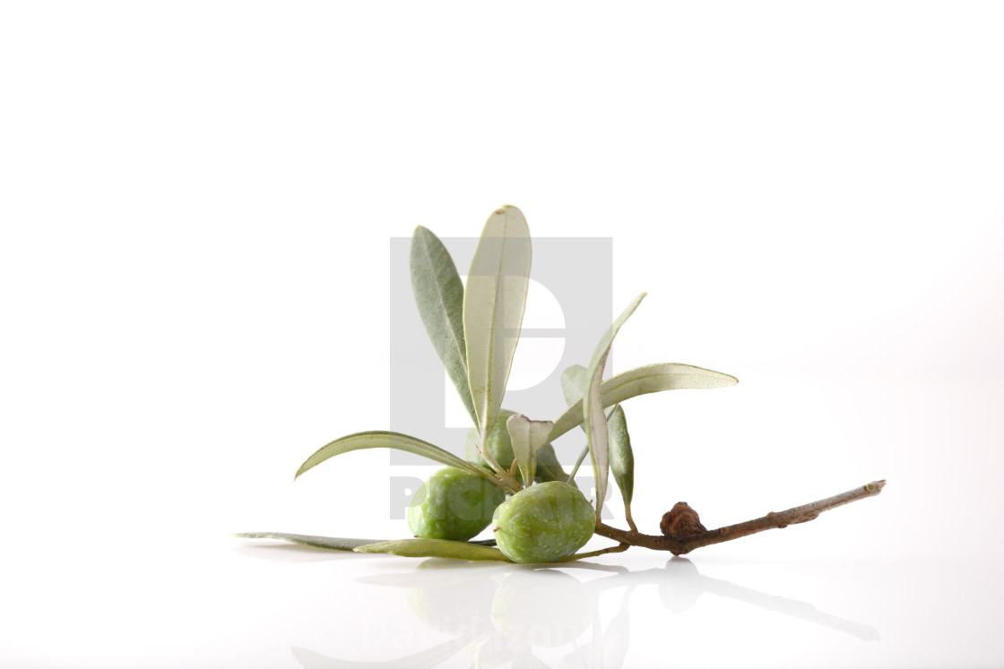 """""""Olive twig with olives on table and white isolated background"""" stock image"""