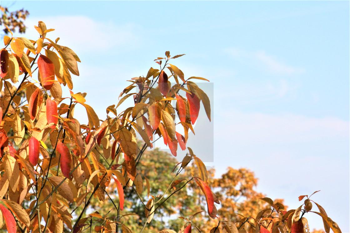 """Autumn Colors"" stock image"