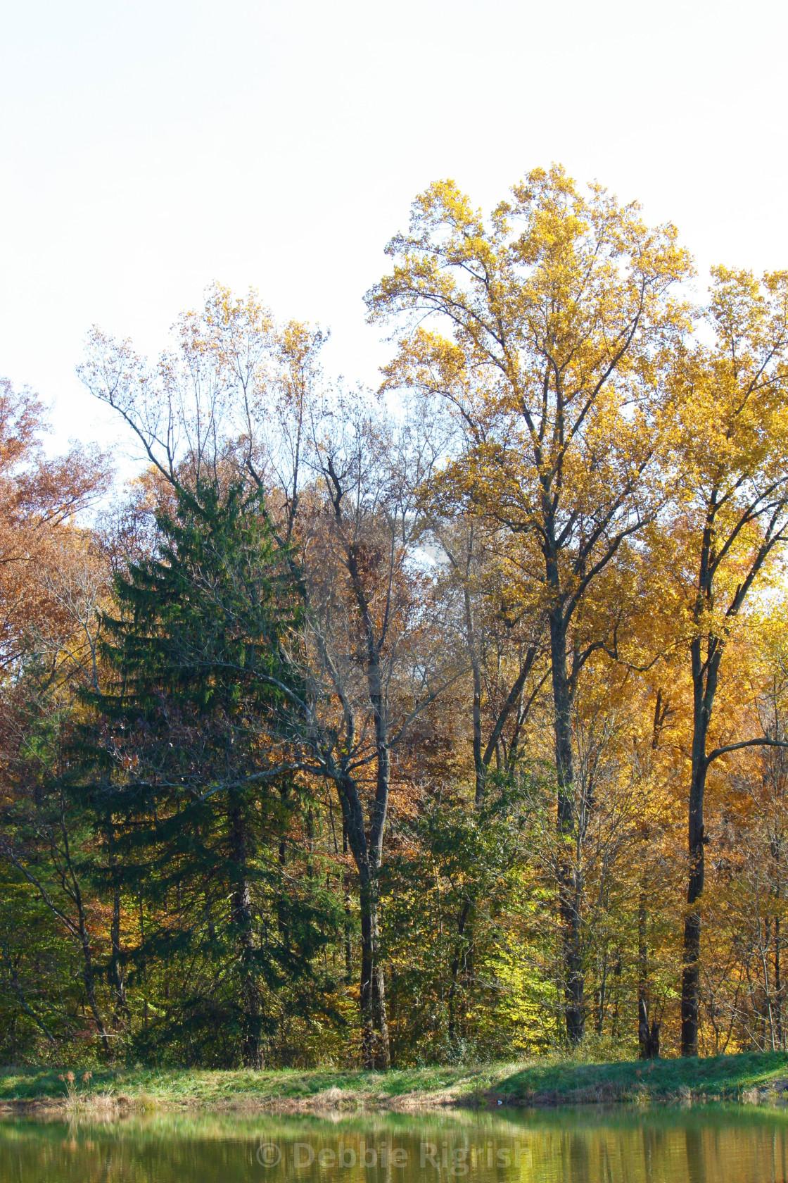"""Fall Color No 3"" stock image"