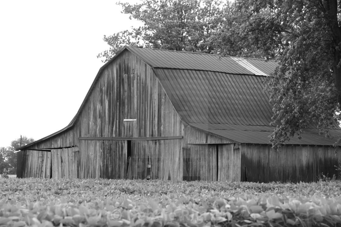 """Weathered Barn No. 4 black & white"" stock image"