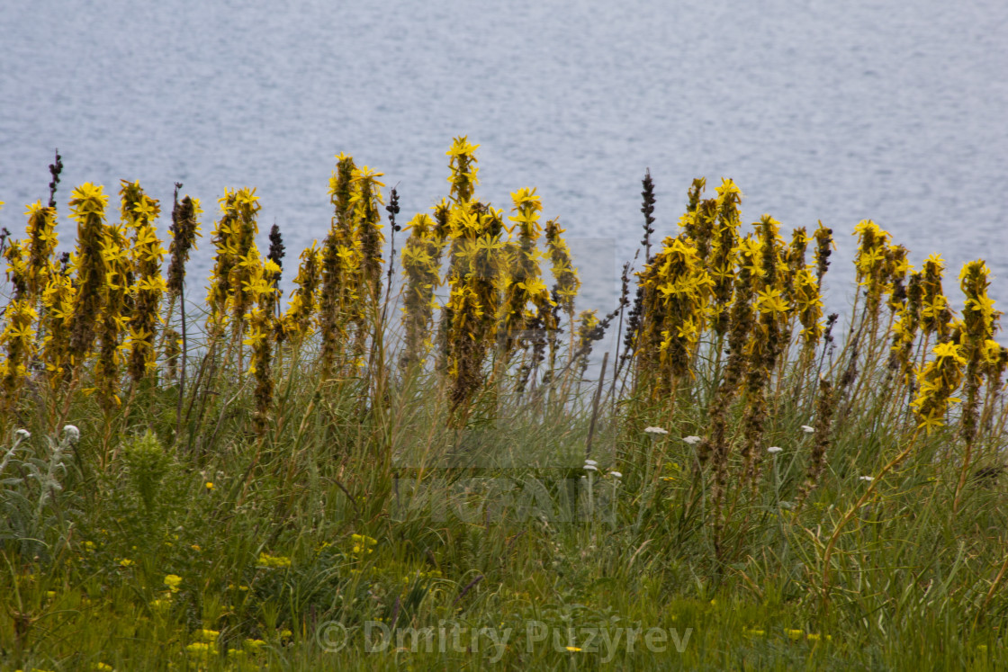 """Yellow flowers on the seashore"" stock image"