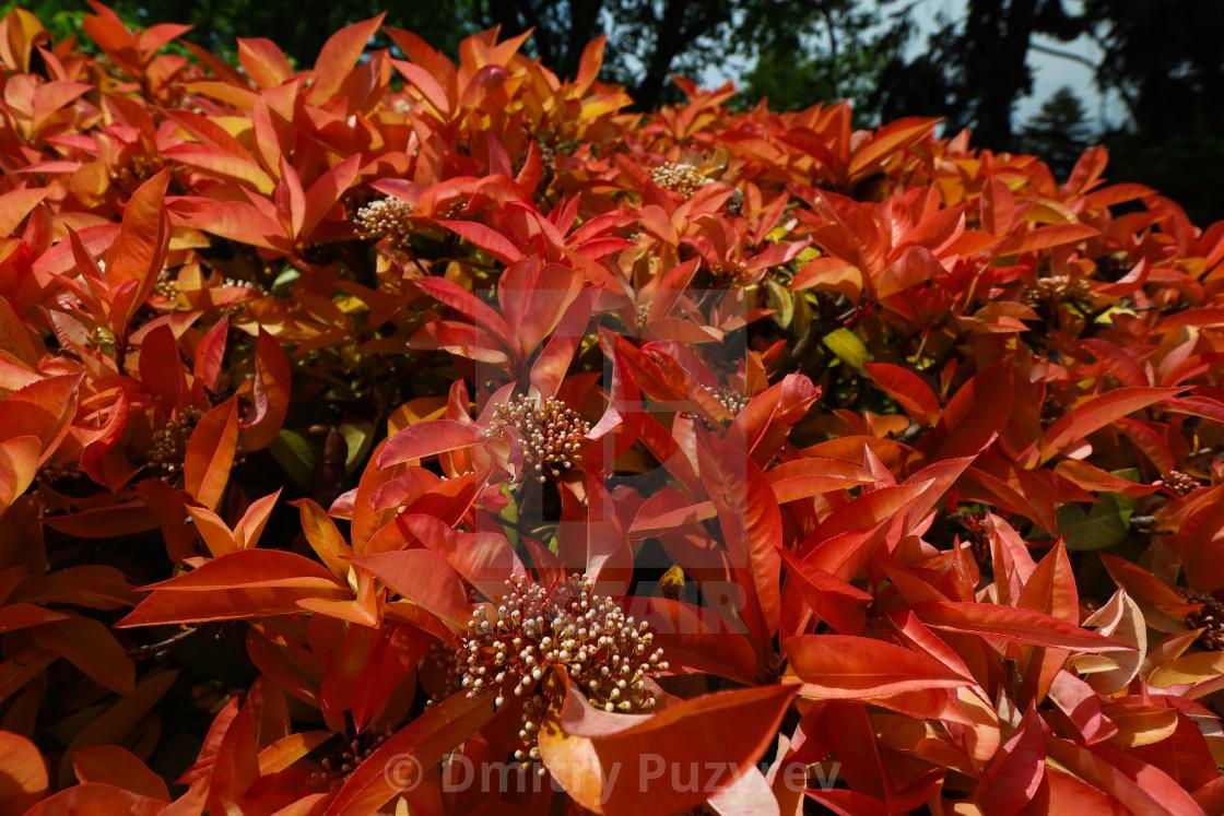 """Botanical garden in Balchik"" stock image"
