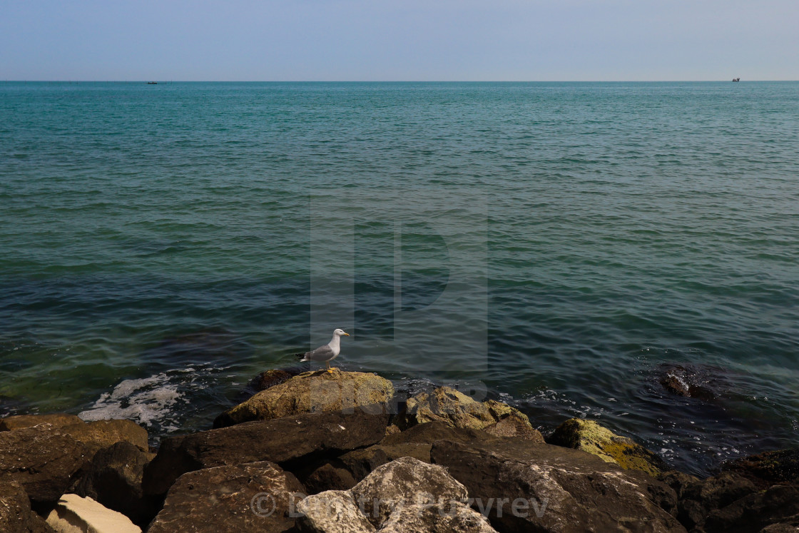 """""""Sea and the seagull"""" stock image"""