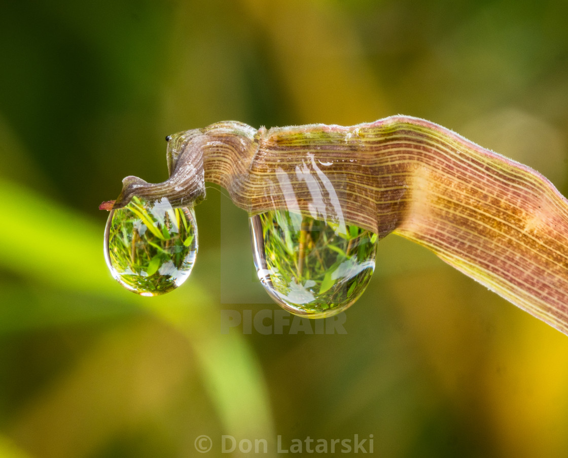 """Bamboo leaf & two globes"" stock image"