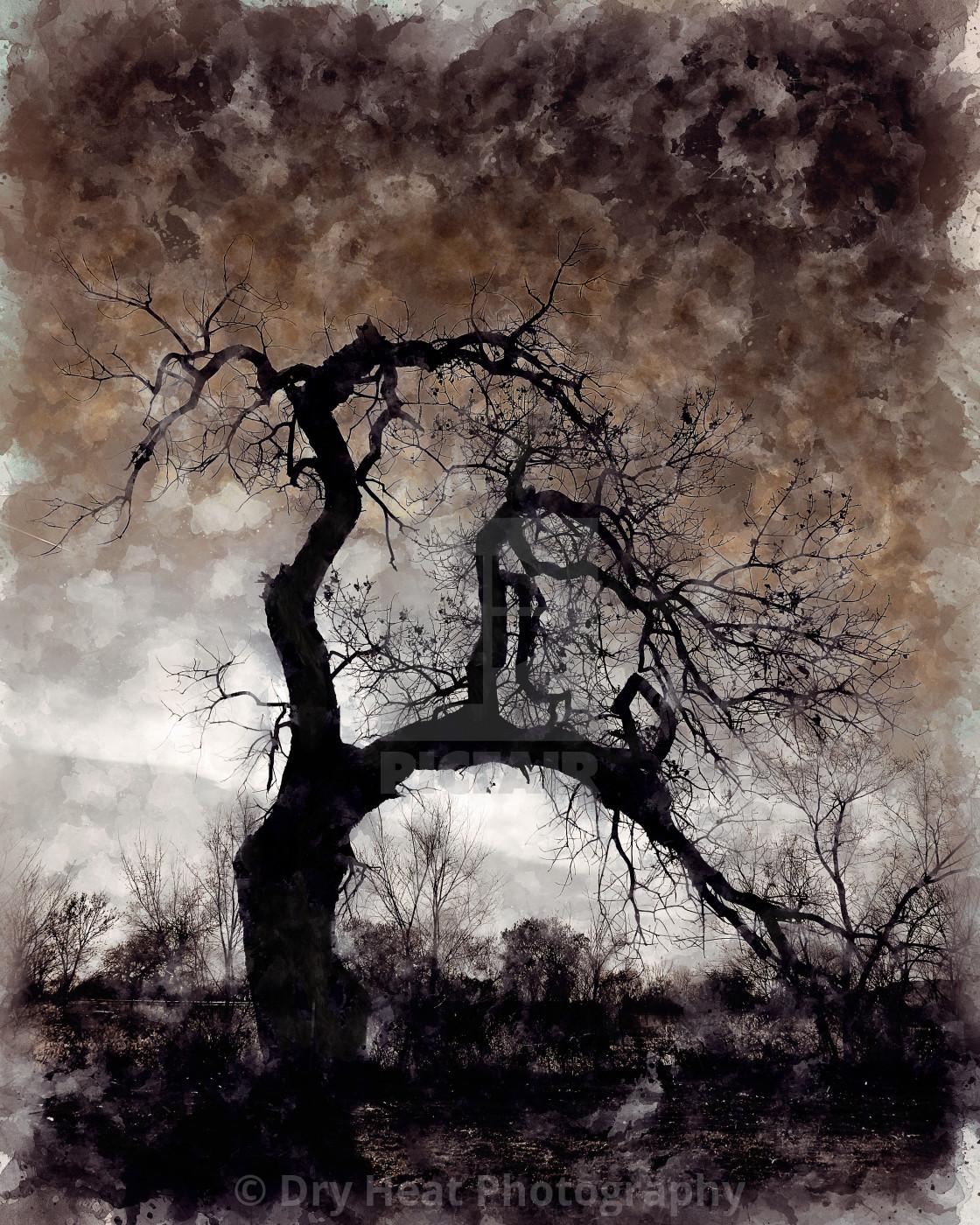 """Winter Cottonwood tree in Los Lunas, New Mexico."" stock image"