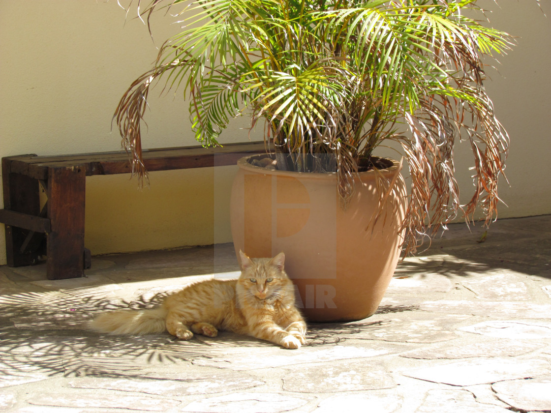 """""""A ginger cat relaxes in the shade of a potted palm."""" stock image"""