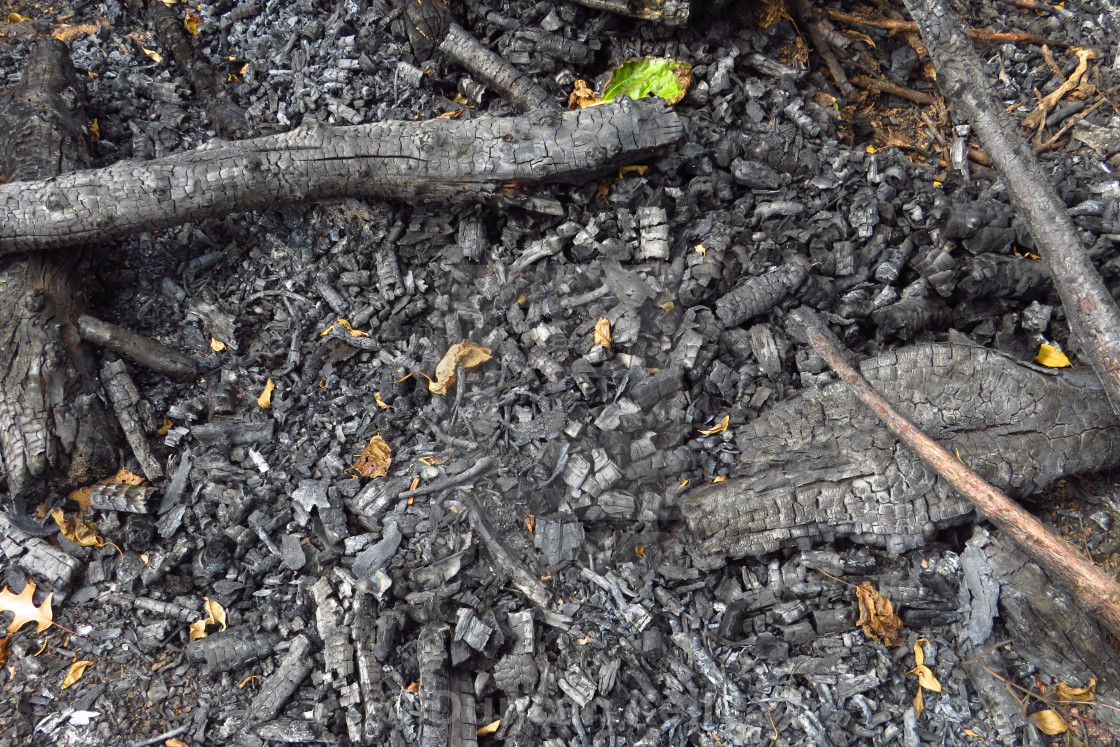 """""""A burnt out forest fire is now only coals."""" stock image"""