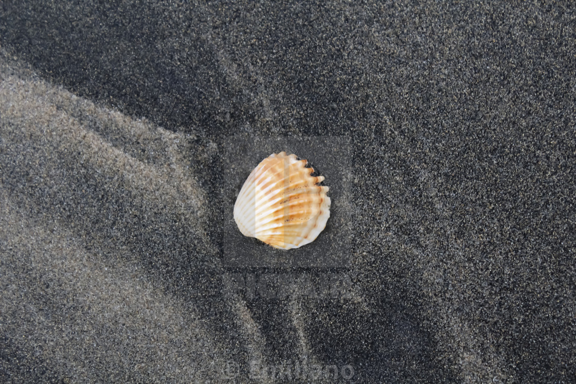 """""""Conch in the sand"""" stock image"""