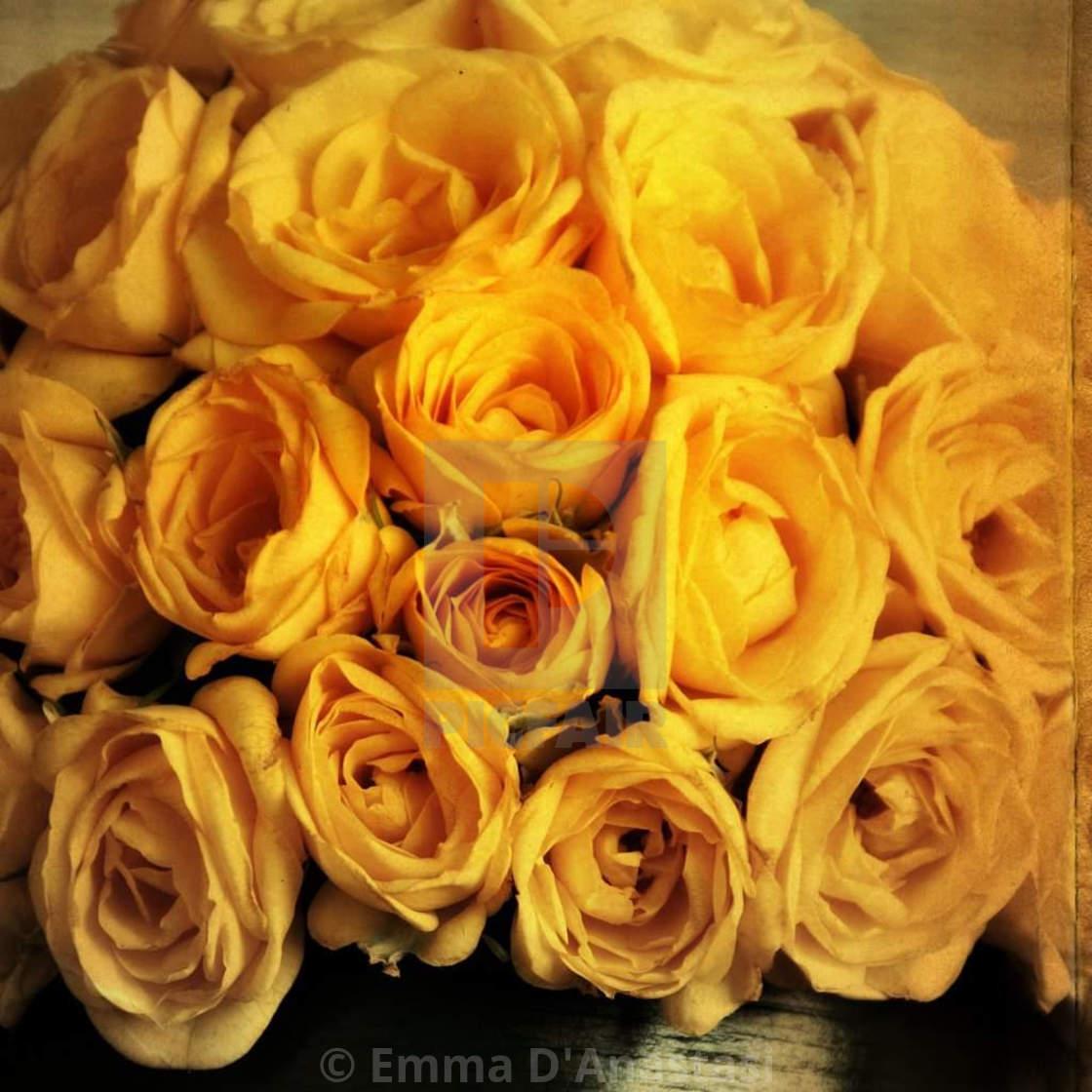 """Yellow roses"" stock image"