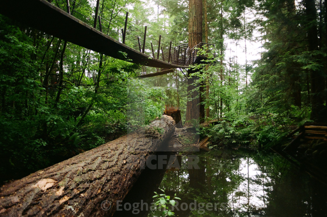 """""""Forest Walk"""" stock image"""