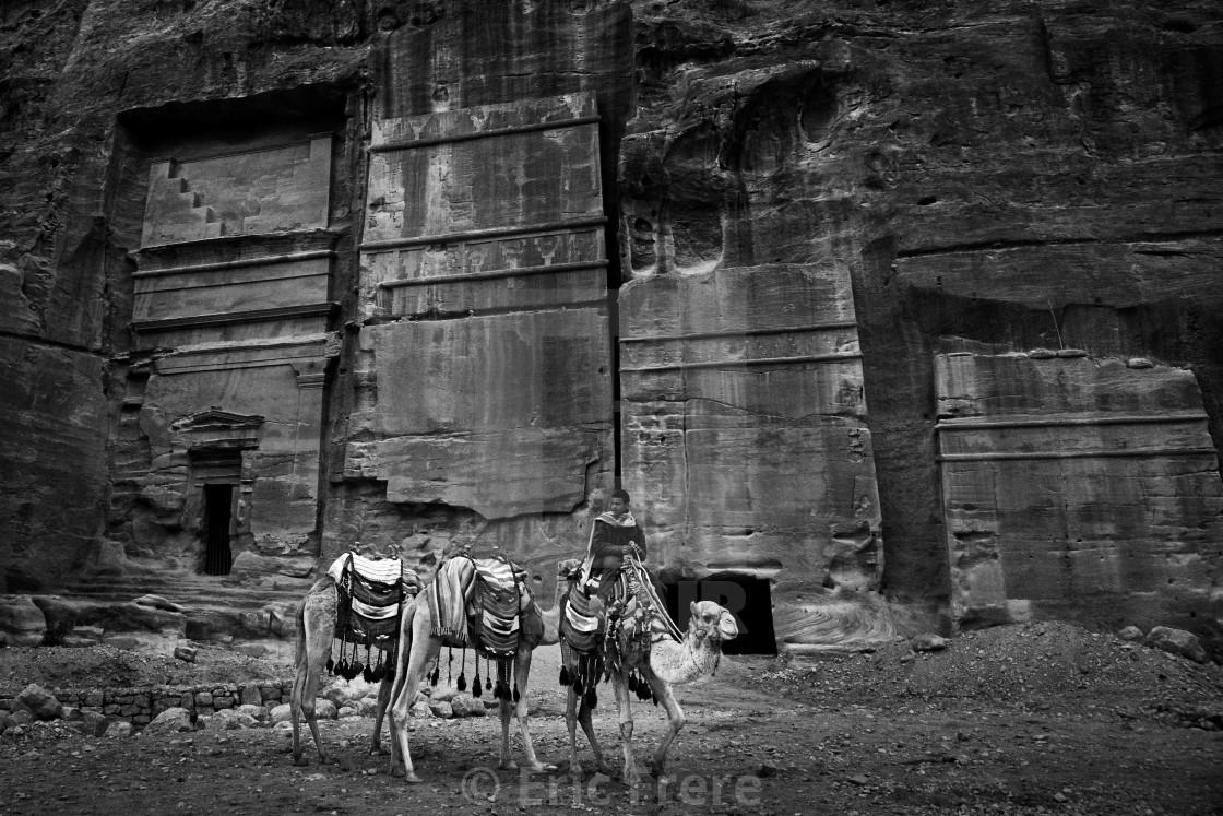 """Camels passing through Al-Siq"" stock image"