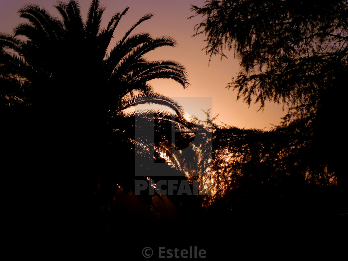 """purple sunset in the palmtree"" stock image"