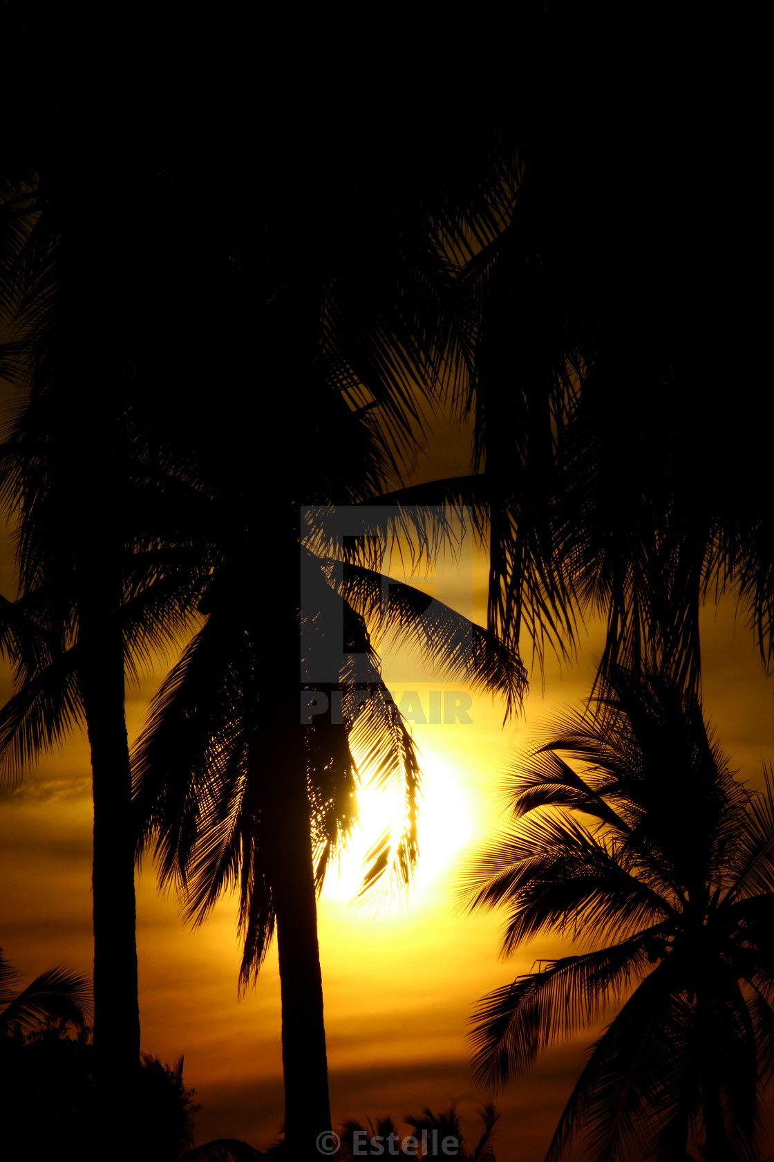 """""""Yellow sunset in the palmtree"""" stock image"""