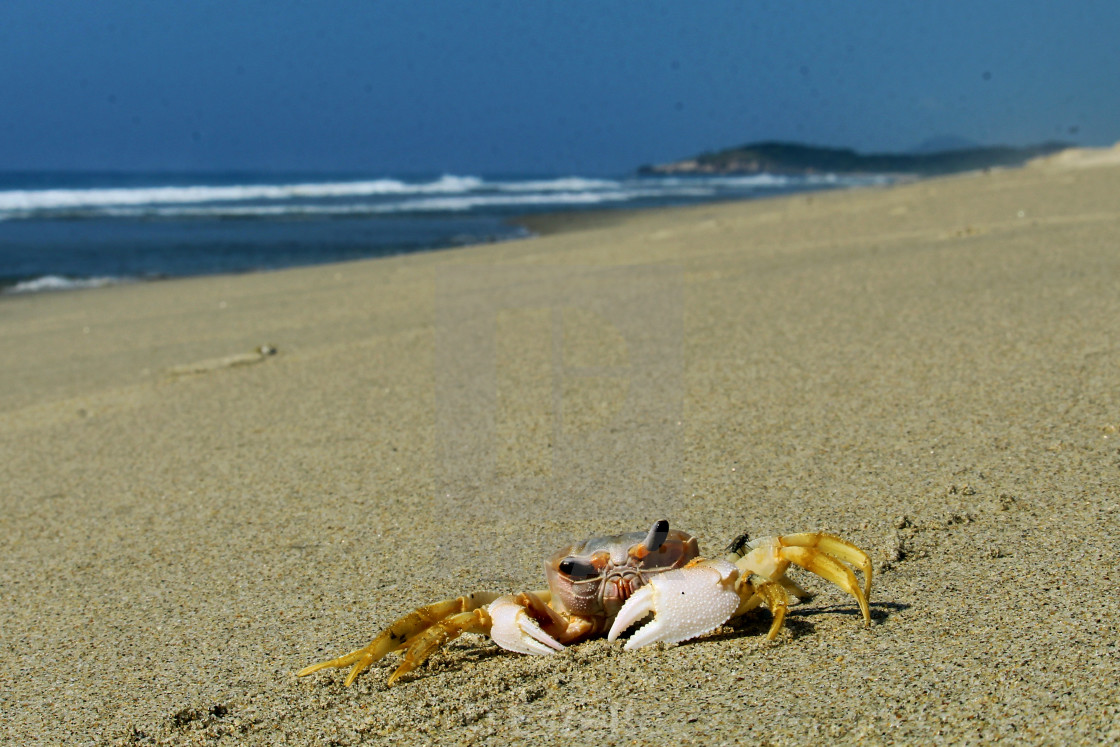 """""""crab on the beach"""" stock image"""