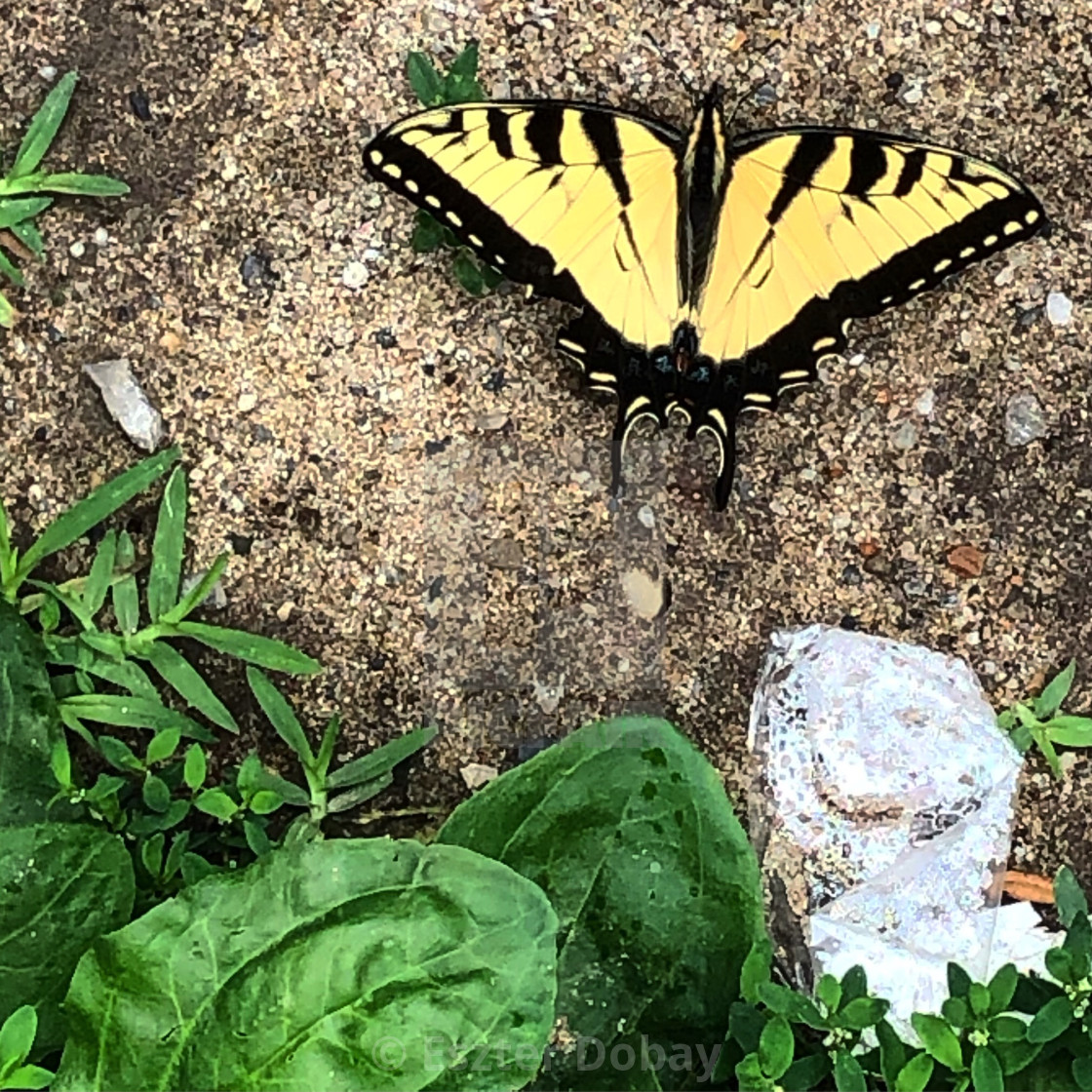 """""""Yellow butterfly composition"""" stock image"""