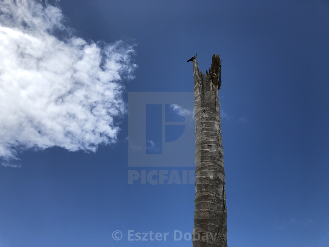 """Bird on tree with cloud"" stock image"