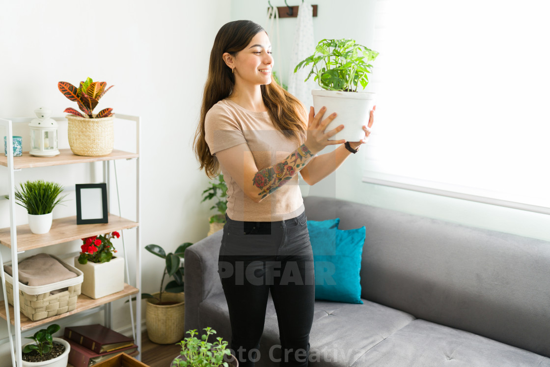 """Female gardener looking at her growing houseplant"" stock image"
