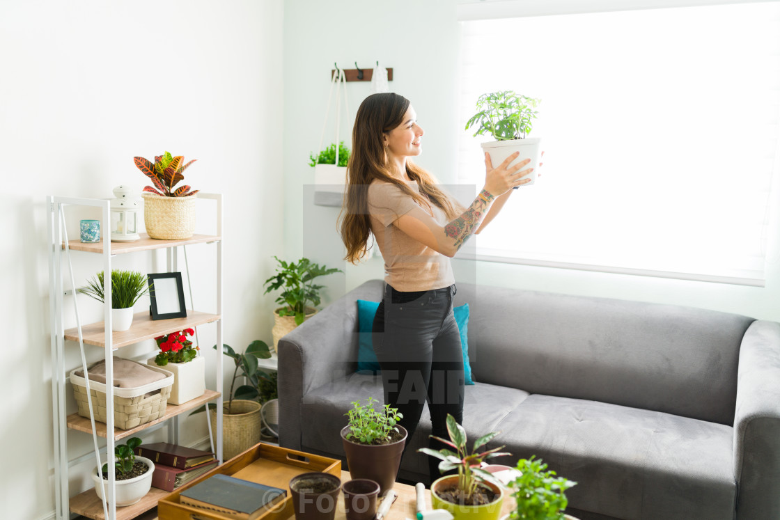 """Latin woman admiring a beautiful plant on a pot"" stock image"