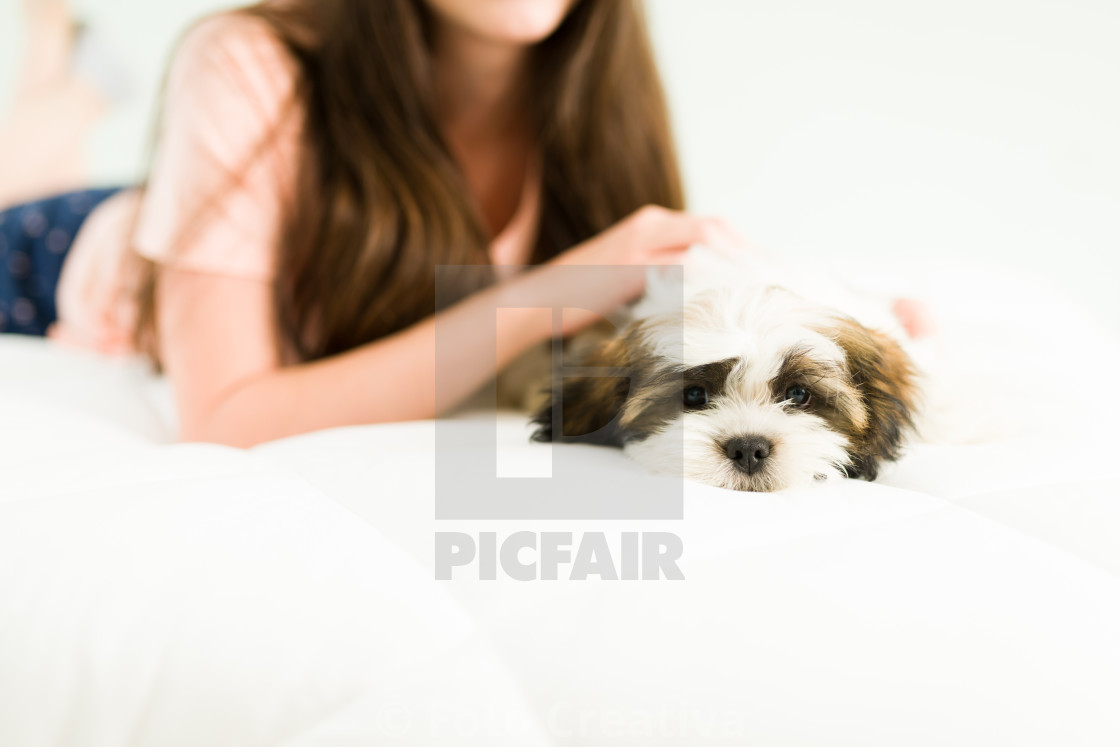 """""""Portrait of a tired little puppy relaxing in the bedroom"""" stock image"""