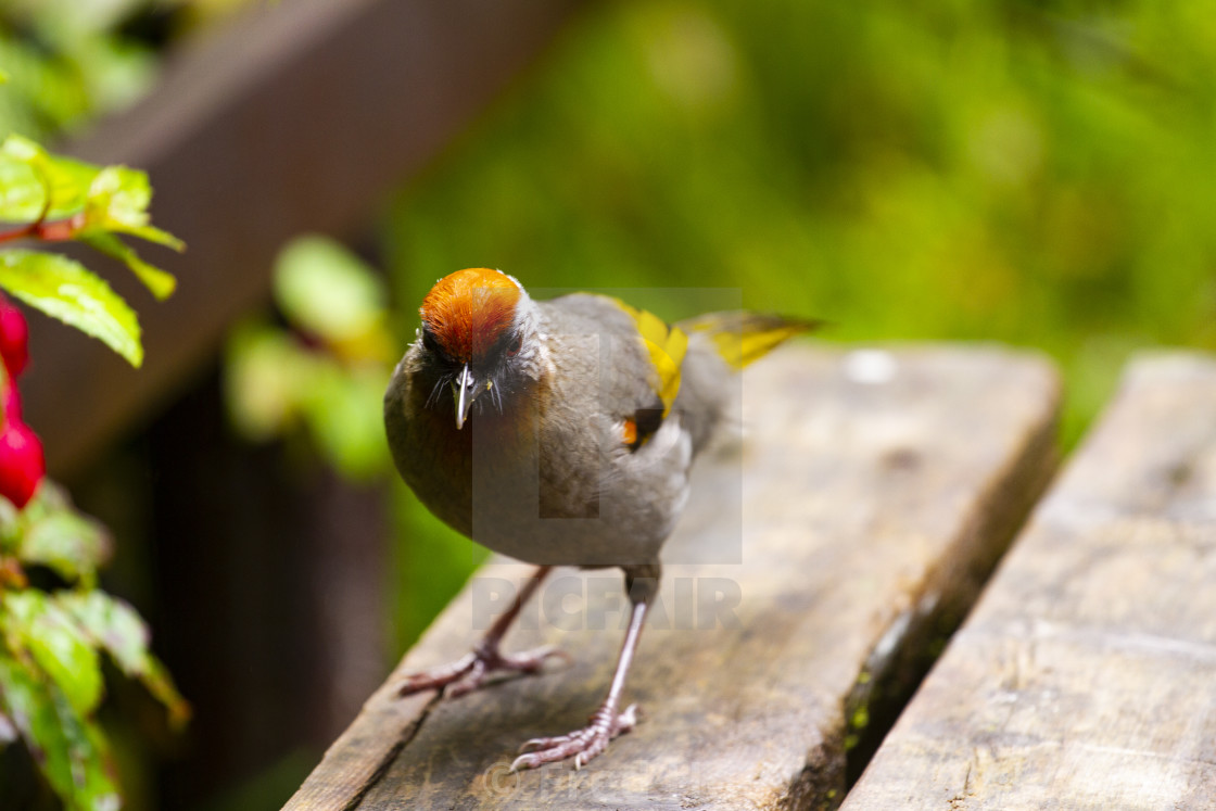 """Bird on the woodern table."" stock image"