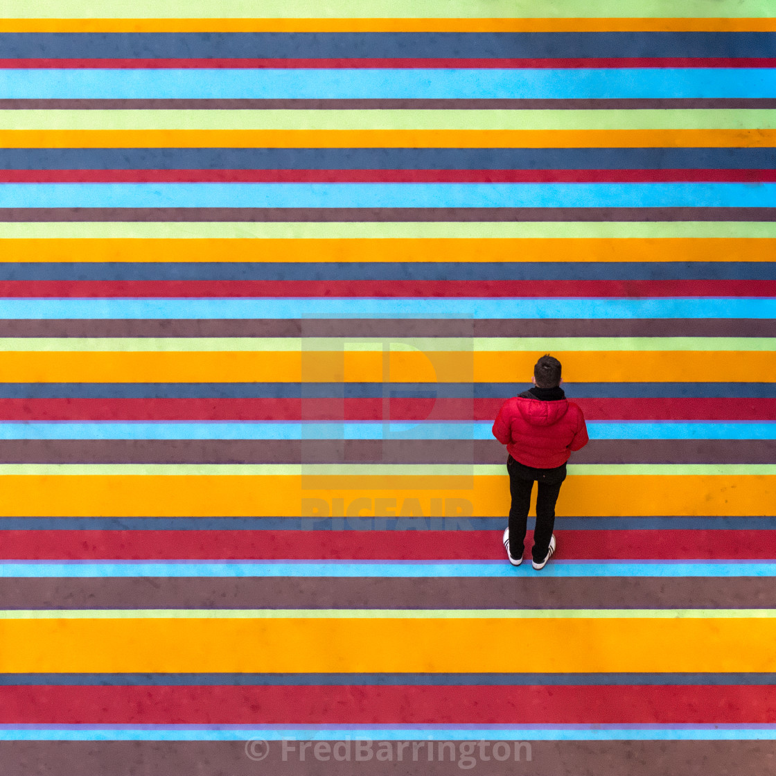 """Among the Stripes"" stock image"