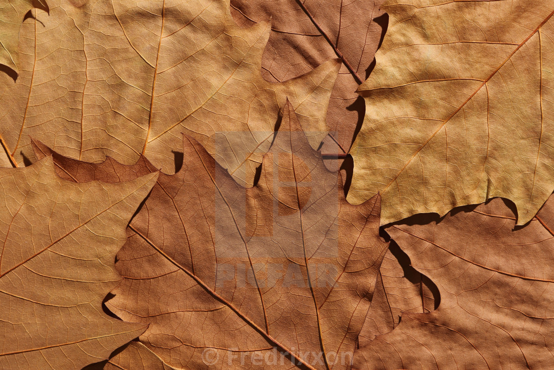"""""""Autumn symphony in gold and brown."""" stock image"""