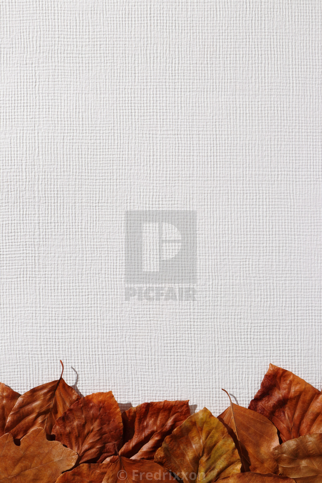 """""""Colorful beech and oak leaves close-up."""" stock image"""