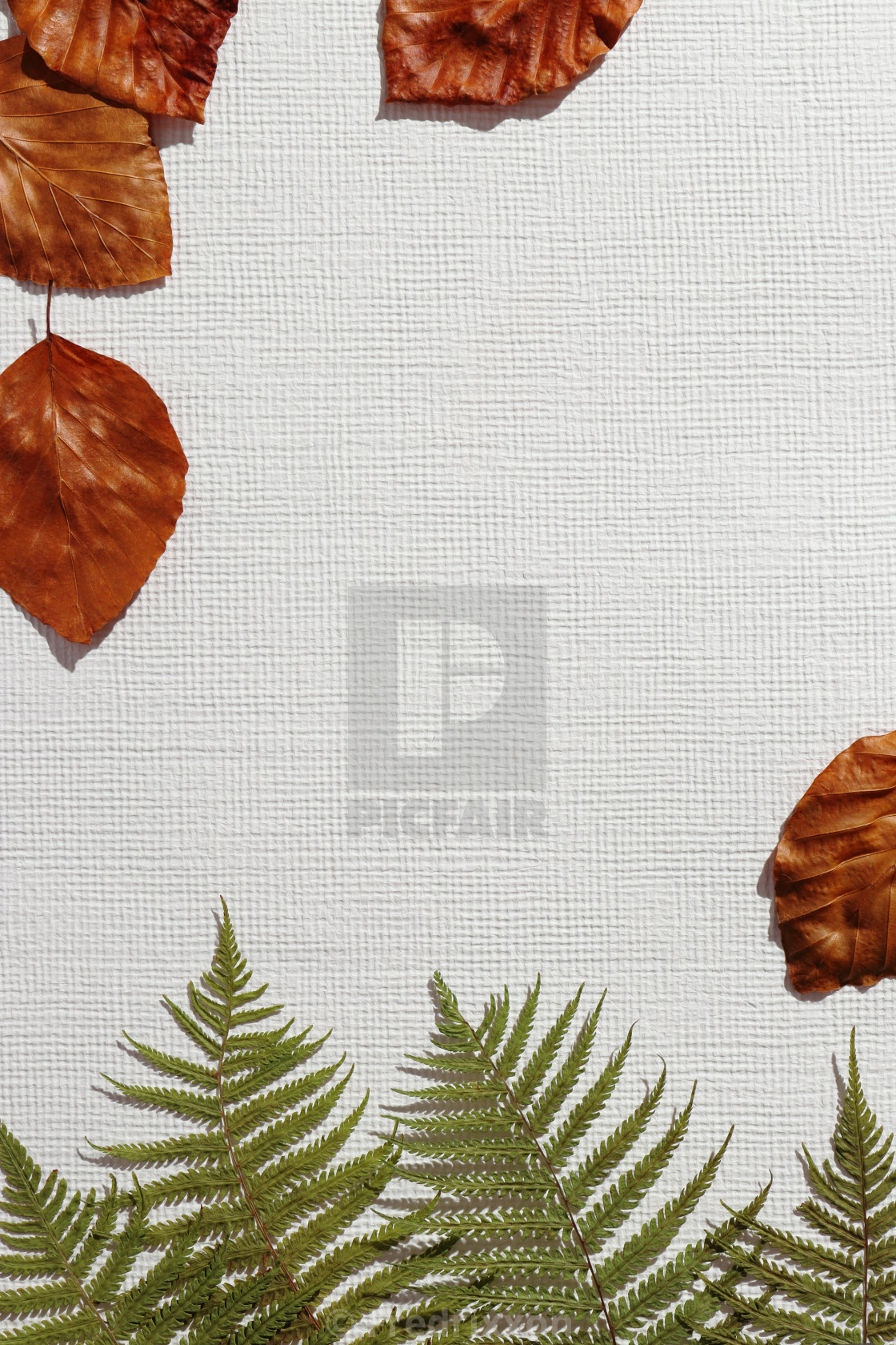 """""""Beech and fern leaves close-up."""" stock image"""