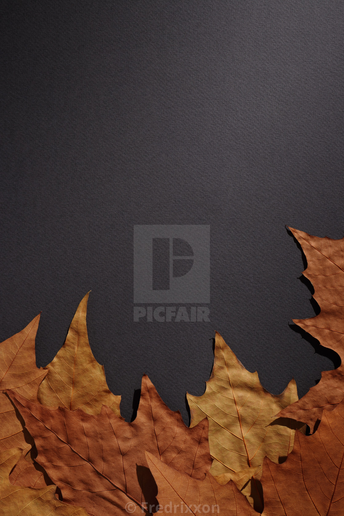 """""""Colorful plane tree leaves close-up."""" stock image"""