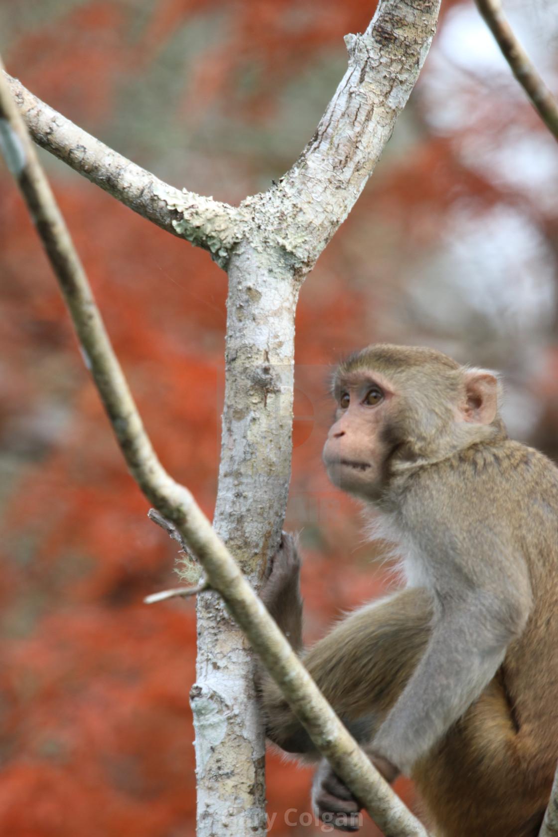 """""""Monkey"""" stock image"""