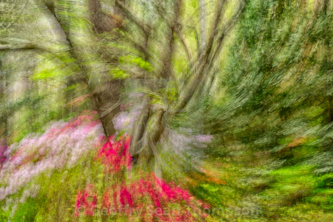 """Spring Abstraction"" stock image"