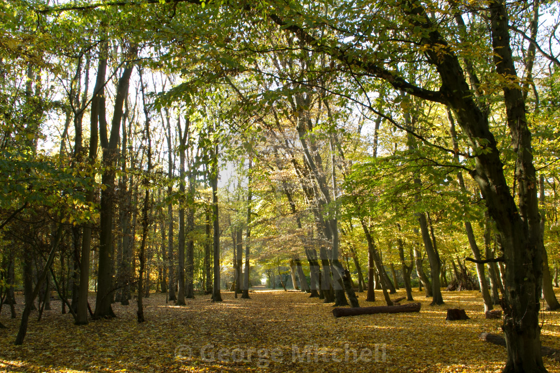 """""""Country autumn scene with sunshine"""" stock image"""