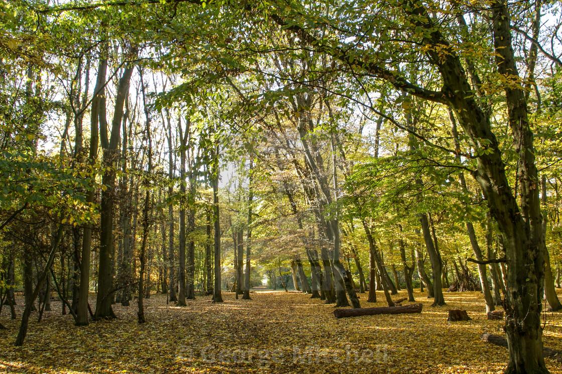 """Autumn Forest Scene"" stock image"