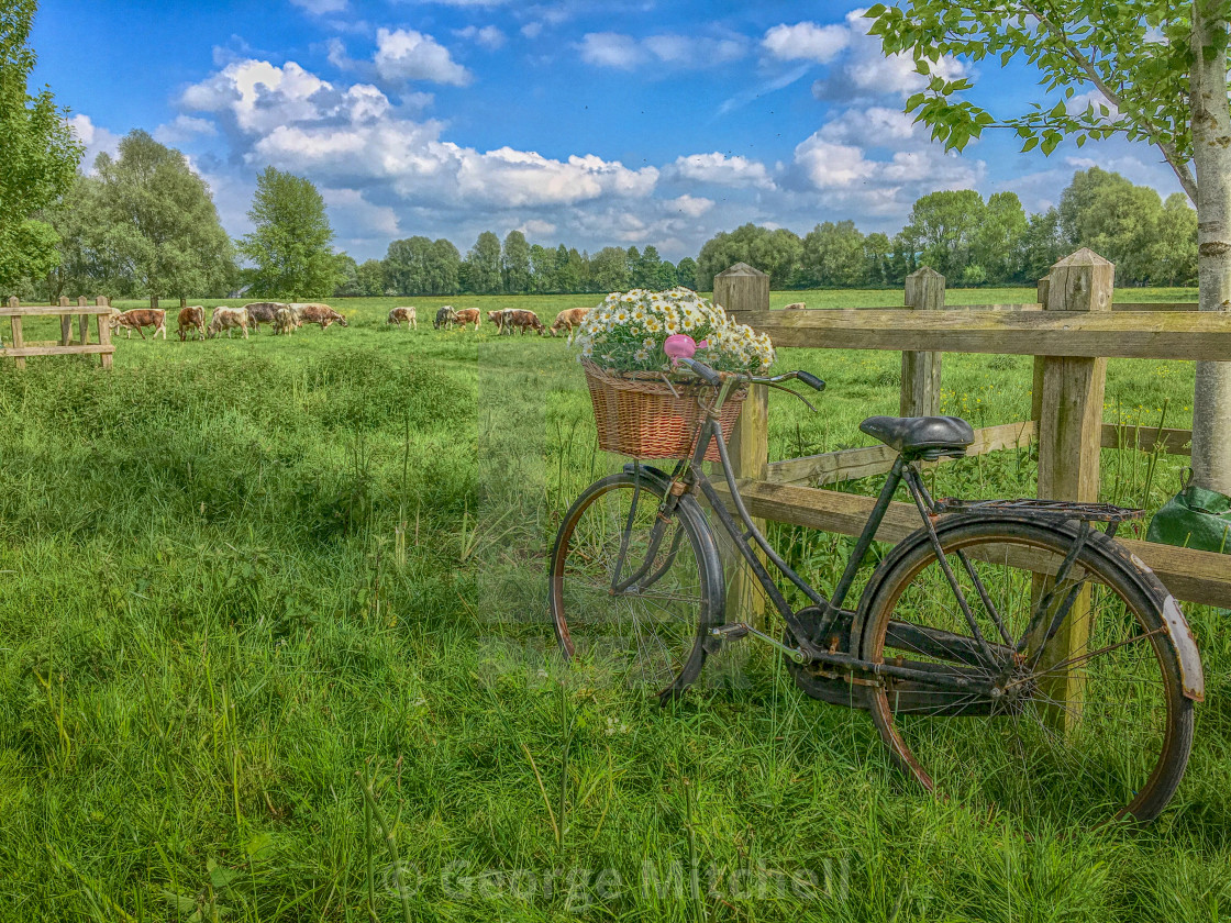 """""""Bicycle with Flowers"""" stock image"""