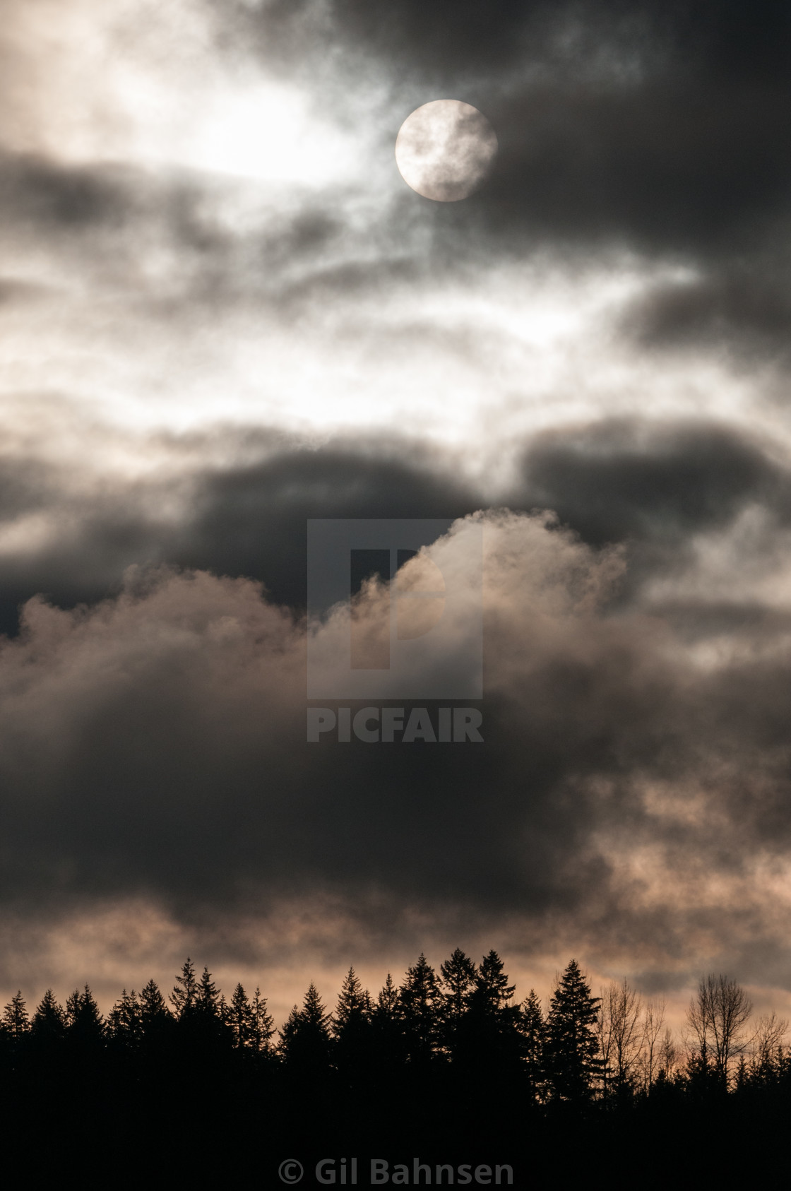"""Dramatic Clouds Silhouetted Trees"" stock image"