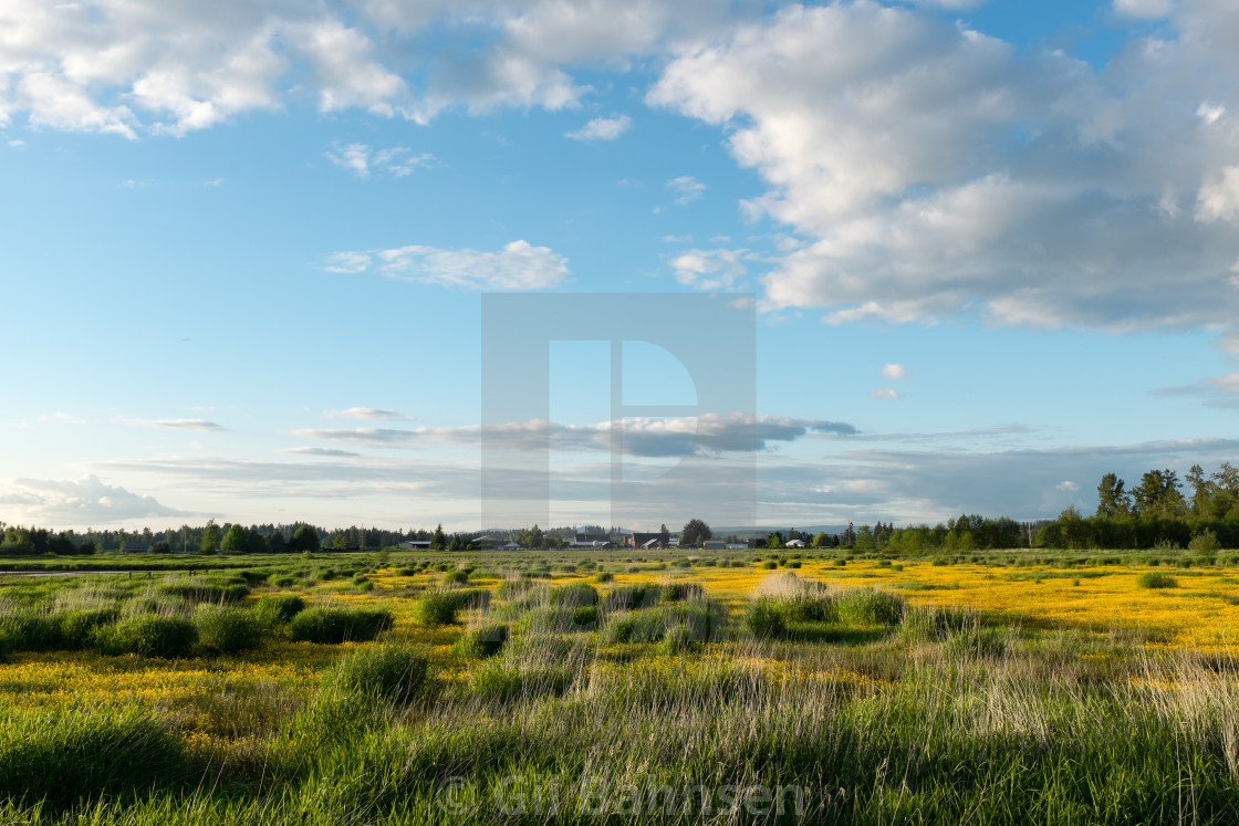 """Late Spring Meadow"" stock image"