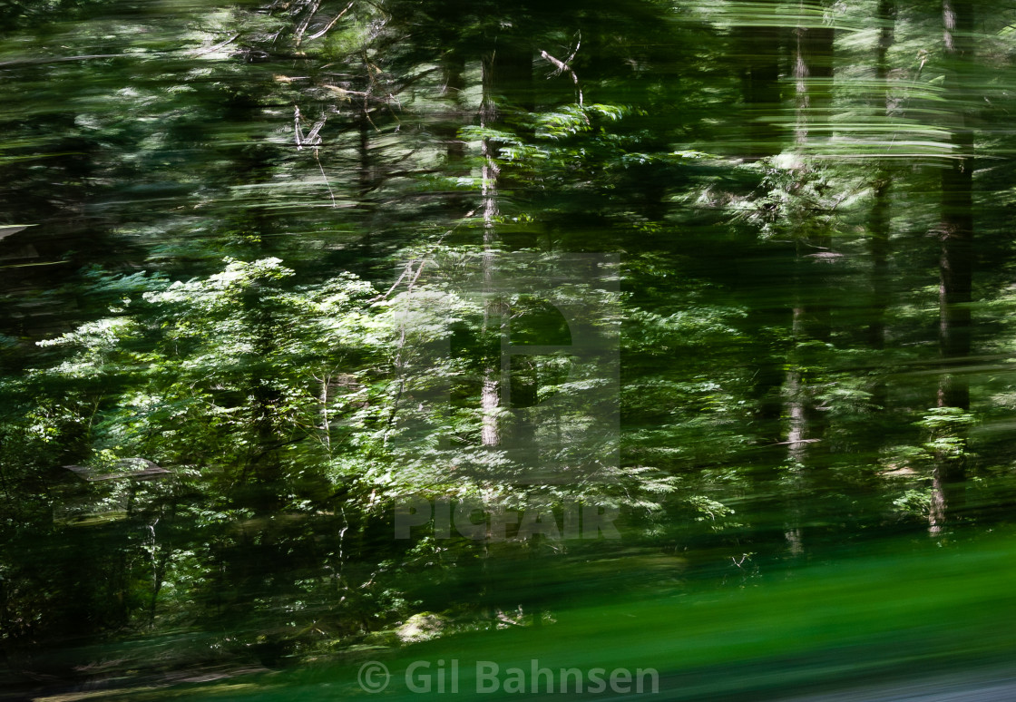 """Trees by a Forest Road"" stock image"