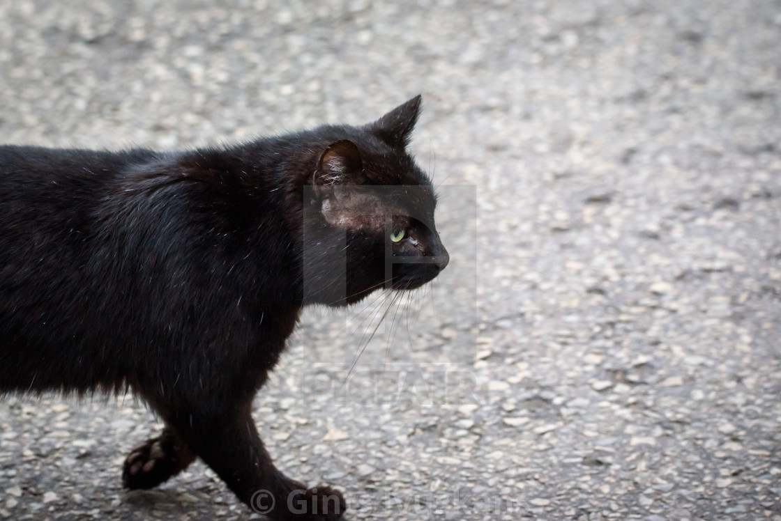 """Black stray cat on the stree in city."" stock image"