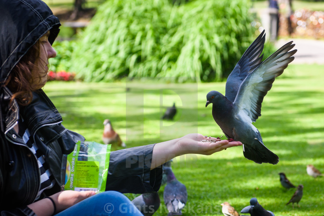 """""""Group of youth feeds pigeons at park. Riga, Latvia."""" stock image"""