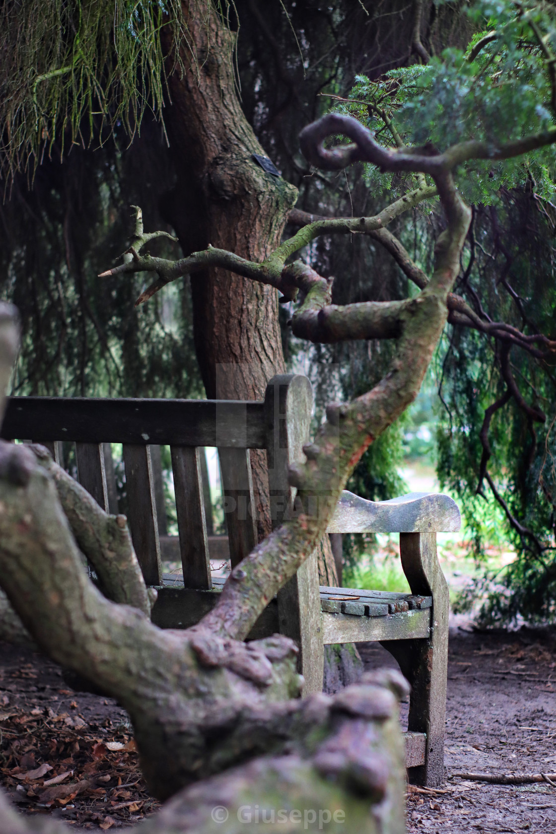 """""""Bench in the park"""" stock image"""