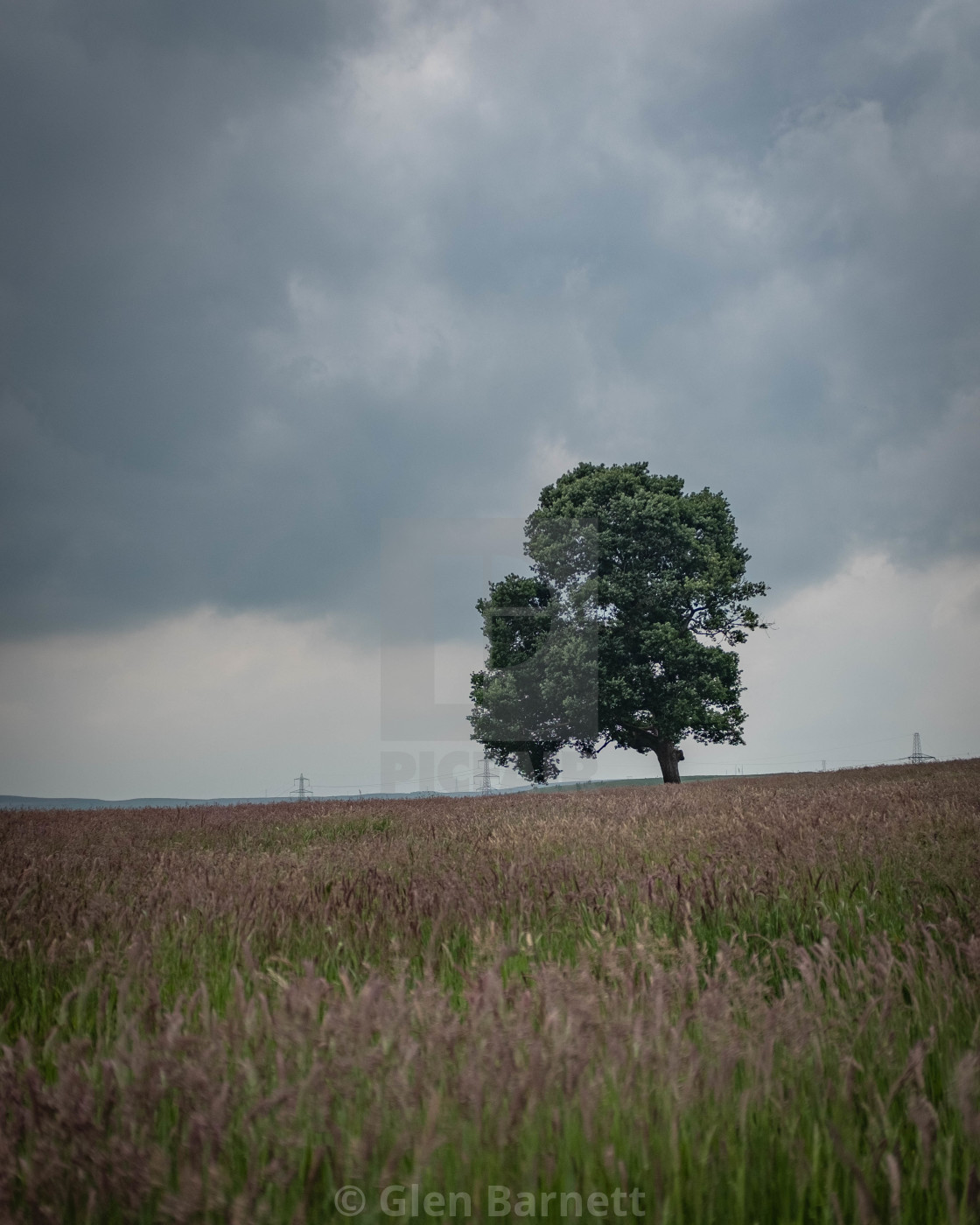 """The lone tree"" stock image"
