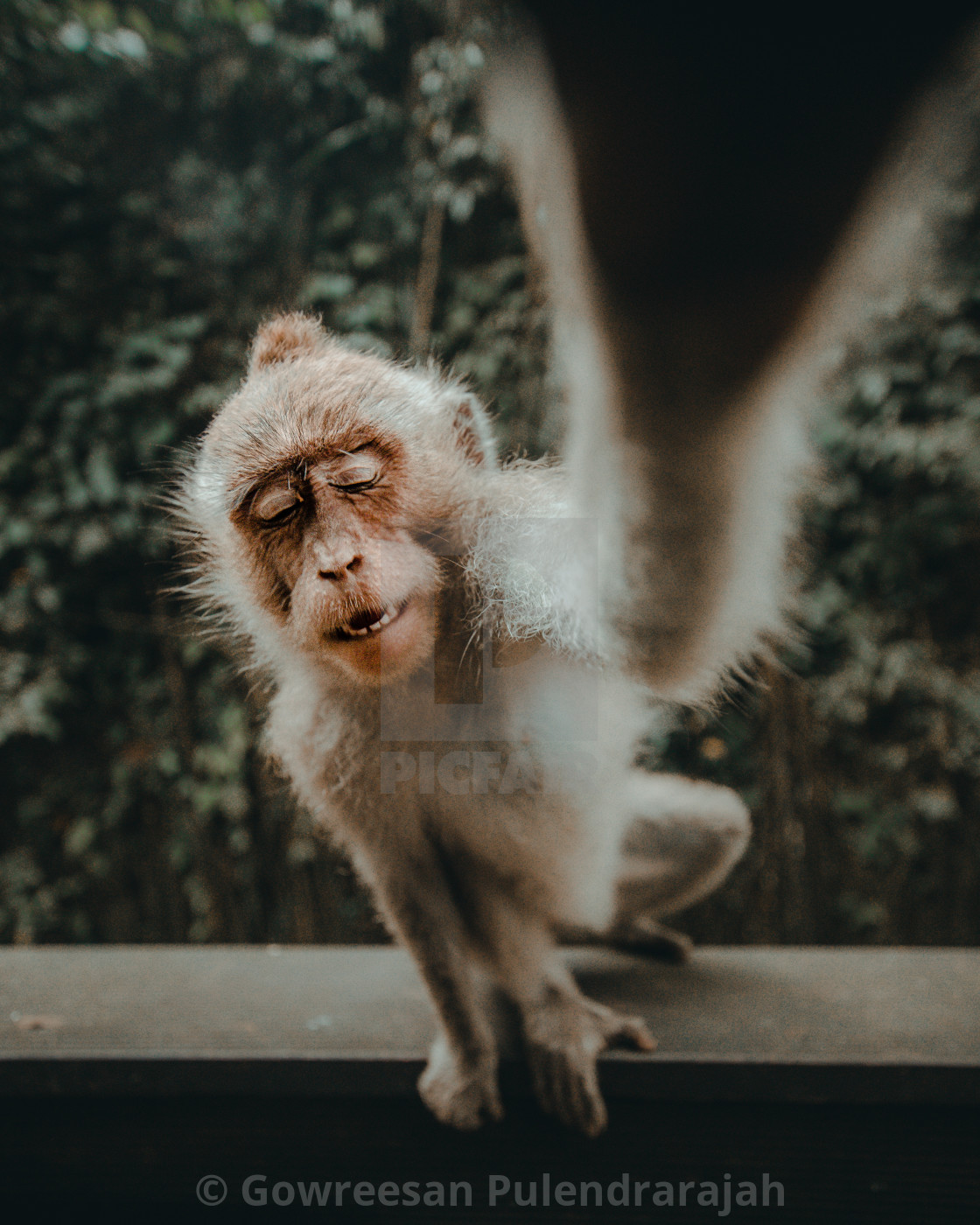 """Ubud monkey forest"" stock image"